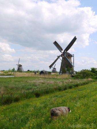 2014_0507オランダ20140331