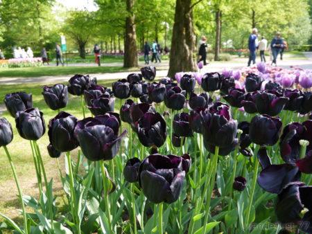 2014_0507オランダ20141537